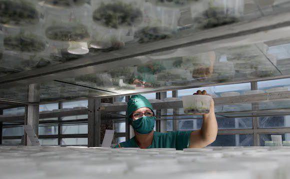 Trabajadora de la empresa de semillas de Cienfuegos. Foto: Ismael Francisco/Cubadebate.