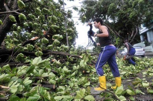 Bajo la lluvia, trabajadores de Áreas Verdes de La Habana laboran en la recogida de árboles y ramas caídas, producto de las fuertes rachas de vientos, provocadas por el huracán Irma, el 9 de septiembre de 2017.    Foto: Madelín Ramírez ACN.