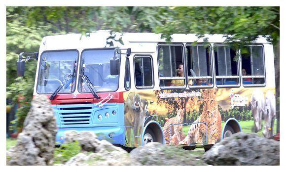 Uno de los ómnibus que hacen el safari por el Parque Zoológico Nacional. Foto: Jorge Luis Sánchez Rivera / Cubadebate