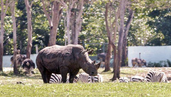 Parque Zoológico Nacional. Foto: Jorge Luis Sánchez Rivera / Cubadebate