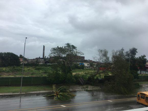 Dos árboles derribados en Vía Blanca, Cerro. Foto: RAF / Cubadebate