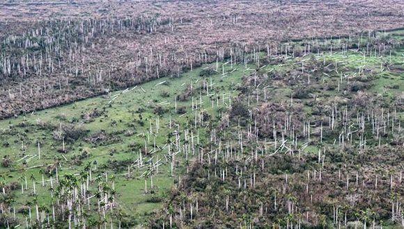 Los bosques del centro de isla quedaron quemados por la fuerza de los vientos del huracán Irma. Foto: Heidi Calderón.