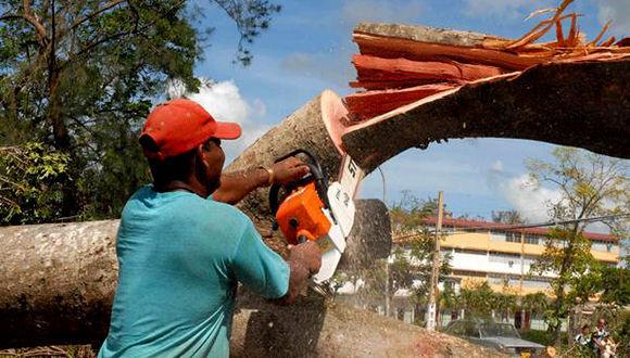 Entre las principales afectaciones del territorio nacional tras le paso del huracán Irma se necuentran la caída de grandes árboles. Foto tomada de Radio Reloj.