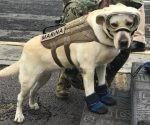frida-perra