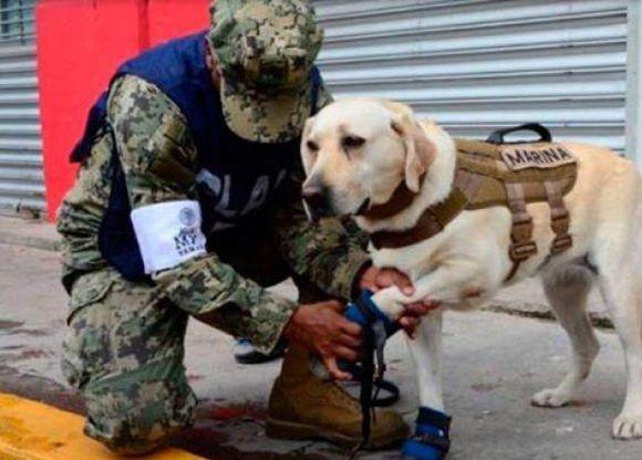 La perra rescatista cuenta con cinco años de experiencia. Foto: @PresidenciaMX