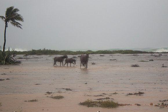 La penetración del mar es lo que más ha afectado a Gibara. Foto: Ahora.