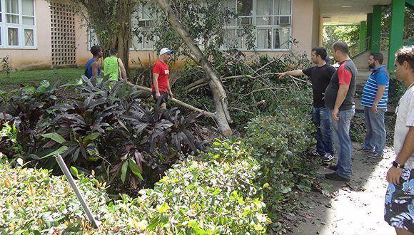 Labores de recogida de árboles caídos, poda e higienización en la Universidad. Foto: UCI