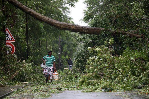 Un hombre camina entre los árboles derribados por el huracán María en Guadalupe. Foto: Andres Martinez Casares / Reuters