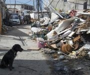 "A dog sits next to   detritus on September 18, 2017, in Sandy Ground on the French Caribbean island of Saint-Martin, after it was hit by Hurricane Irma. Hurricane Maria barrelled towards the storm-battered eastern Caribbean and was expected to strengthen on September 18 as it churned along a path similar to that of megastorm Irma earlier in the month. The new storm, which the US National Hurricane Center warned could become a ""major hurricane"", threatens the French territory of Guadeloupe, which was the staging area for relief operations for several islands hit by Irma. / AFP PHOTO / Helene Valenzuela"
