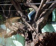 Una de la tareas prioritaria ha sido la recogida de árboles caídos sobre tendidos eléctricos para dar paso a las brigadas especializadas de la UNE. Foto: Darío Gabriel Sánchez García/CUBADEBATE.