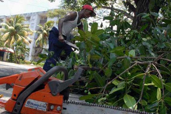 La poda de árboles es una tarea que ya se acomete en todos los municipios tuneros. Foto: Rey López/ Periódico 26.