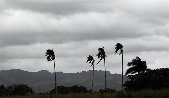 Palmeras se mecen con fuerzas debido a los fuertes vientos ante la inminente llegada del huracán Irma en la localidad de Turiguanó, en la provincia de Ciego de Ávila, Cuba. Foto: EFE.