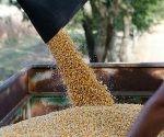 Inicio de la cosecha del ciclo invierno desde la UPSA. Foto: @wcastroPSUV / Twitter