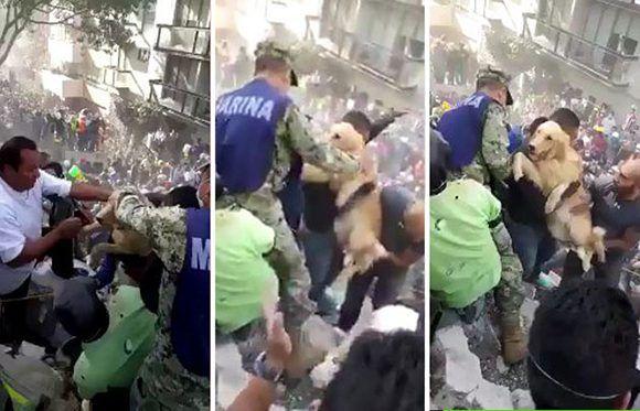 Entre los restos del derrumbe, los rescatistas salvaron a un perro. Imagen: Captura del video.