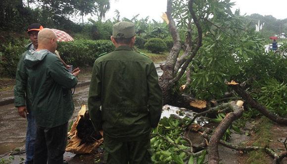 El derribo de pocos árboles sobre las  vías de acceso y cables eléctricos son los daños apreciables hasta este momento en Sagua de Tánamo. Foto: Ahora.
