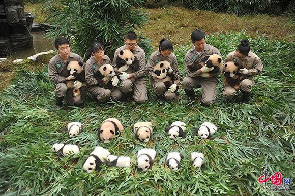 36-crias-de-osos-panda-5
