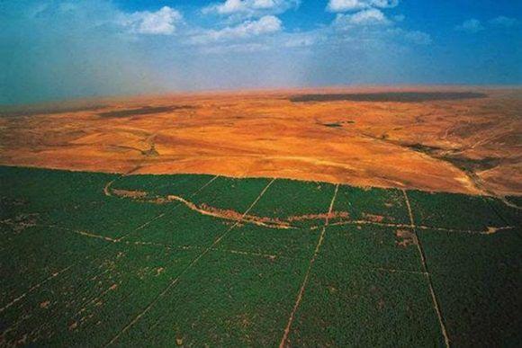 Catorce países africanos están plantanado millones de árboles para crear una enorme barrera verde alrededor del desierto del Sahara y poder frenar el impacto del cambio climático. Foto: ONU.