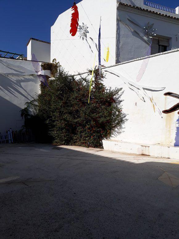 Los patios de Córdoba. Foto: Maribel Acosta