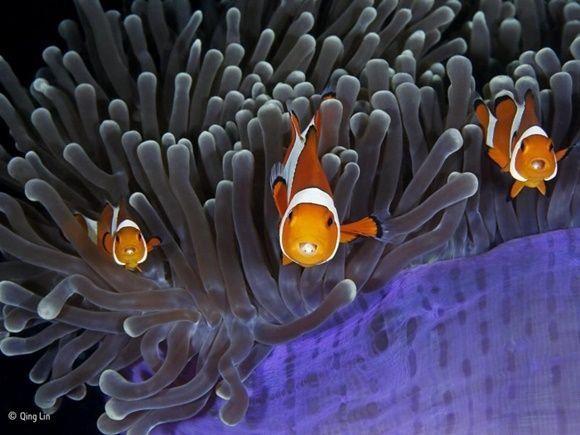 """The insiders (""""Los infiltrados"""") por Qing Lin, de China. Finalista: Under Water."""