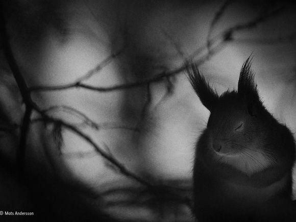 """'Winter pause', """"Pausa de invierno"""" de Mats Andersson, de Suecia. Finalista: Blanco y Negro."""