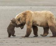 """""""Arctic treasure"""", por Sergey Gorshkov, Rusia. Finalista en la categoría: Retratos animales."""