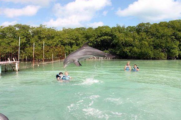 Los seis delfines del Delfinario de Cayo Guillermo entrenan en perfecto estado de salud desde el 24 de septiembre. Foto: ACN