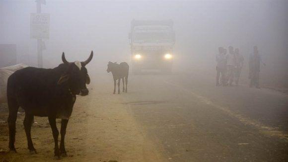 Smog o niebla contaminante en la capital de la India. Foto de internet.