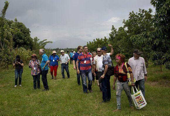 La finca Tierra Brava, antigua zona firme de marabú, implementa desde hace tres años técnicas agroecológicas de agricultura de conservación. Foto: Ismael Francisco