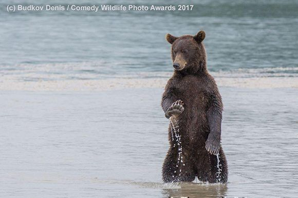 Foto finalista de los Comedy Wildlife Photography Awards / PlayGround