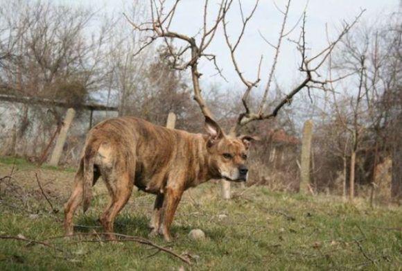 El perro que soñaba ser un arce. Foto: Boriana Kovacheva.