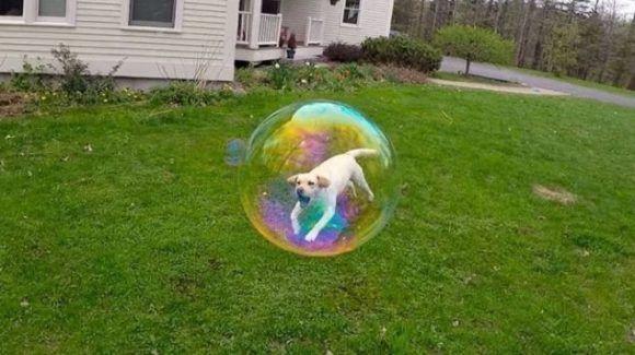 Y este es su amigo el perro que vivía en una burbuja. Foto: @Fizzgig11.