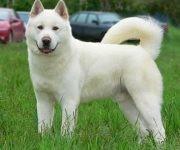 perro-color-blanco