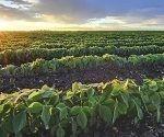 agricultura-luisiana