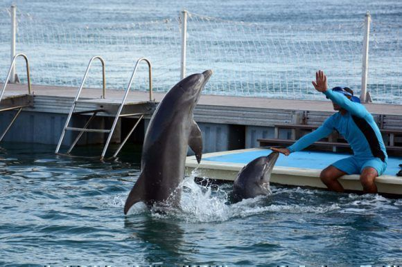 delfinario-cayo-guillermo