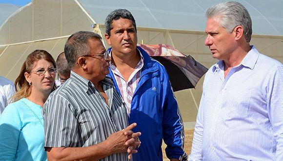Aprecia Díaz-Canel recuperación citrícola en Isla de la Juventud. Foto: Roberto Díaz/ACN