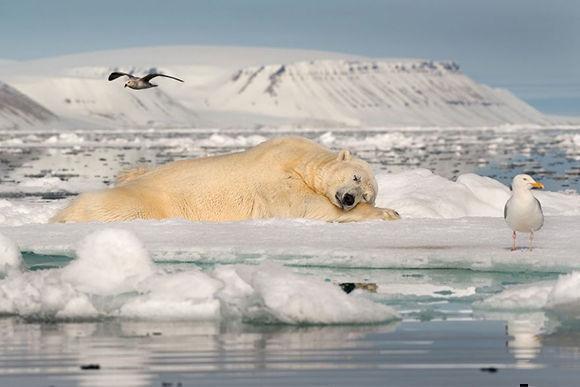 """Roie Galitz ha ganado la categoría de """"Hielo Frágil"""" con """"Dreaming on Sea Ice"""", captada en los fiordos del este de Spitsnergen, en Noruega."""