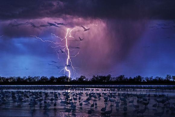 """El premio al """"Fotógrafo del año"""" ha recaído en Randy Olson, creador de """"Sand Hills Cranes"""", fotografía que capta el momento en que un rayo impacta con la tierra en el río Platte, en Nebraska."""