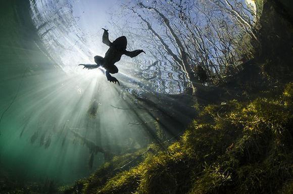 """""""Príncipe de las aguas"""". Foto: Yannick Gouguenheim."""