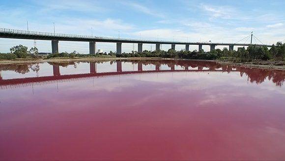Como el traje de una princesa de cuentos, las aguas del lago del Westgate, Park en Melbourne se tiñeron de rosado durante el mes de marzo. Foto: AFP.