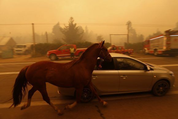 Un grupo de personas salen de San Ramón (Chile) en un coche con su caballo cogido por las riendas después de que un incendio devastara la ciudad de Santa Olga. Foto: Getty Images