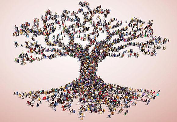 Rbol geneal gico m s grande del mundo 13 millones de for Nombres de arboles en ingles