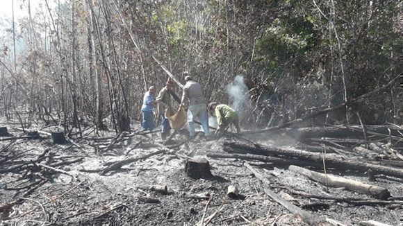 Wildfire destroys 2000 acres of forest in western Cuba