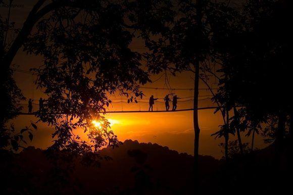 Autor: Cyril Ndegeya. Locación: Parque Nacional Nyungwe, Ruanda.