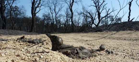Seres humanos son causantes de más del 70 por ciento de la pérdida de biodiversidad