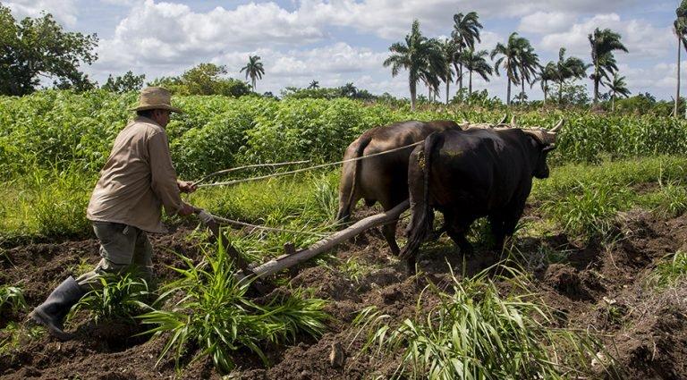 ¿Por dónde anda la agricultura en Camagüey?