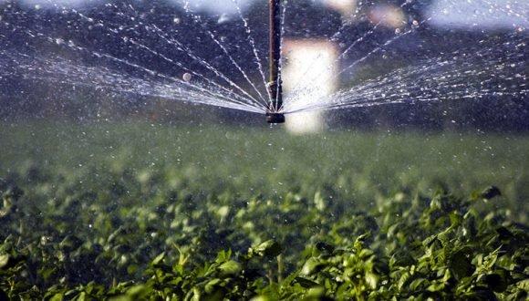 La Opinión del Lector: Hay que fortalecer la base productiva en la agricultura