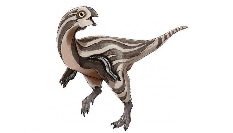 Encuentran en Mongolia nueva especie de dinosaurio plumado y sin dientes