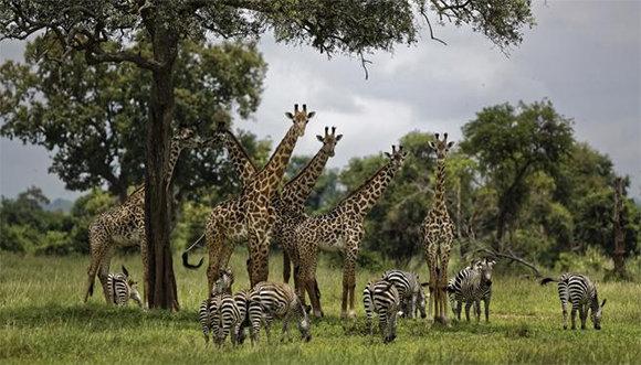 Expertos advierten que pérdida de biodiversidad amenaza desarrollo de la humanidad (+ Video)