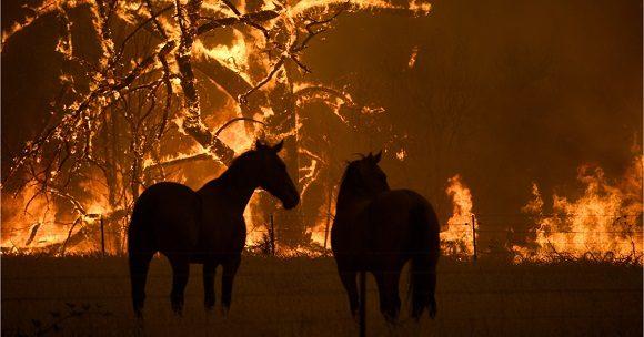 Incendios en Australia dejan casi 500 millones de animales muertos