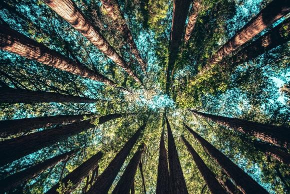 La crisis ambiental no se resuelve solo con plantar árboles
